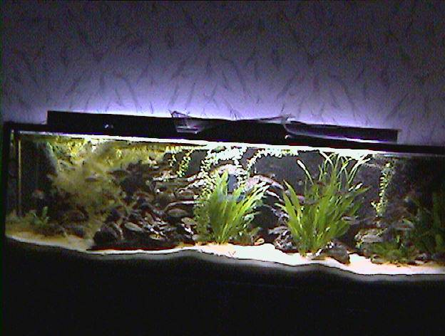 Haltung und zucht for Aquarium einrichtungsideen